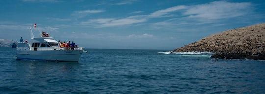 Palomino Islands boat tour