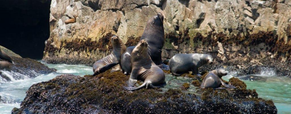 Passeio de barco nas Ilhas Palomino e nado com leões marinhos