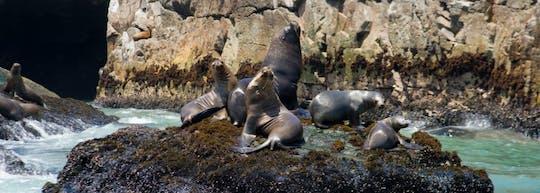 Wycieczka łodzią po wyspach Palomino i pływanie z lwami morskimi