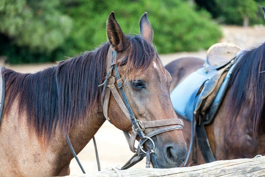 Paardrijden in L'Aldosa