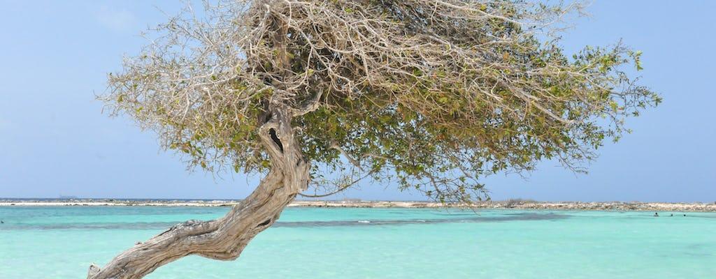 Safári off-road em Aruba Baby Beach e passeio de mergulho com snorkel