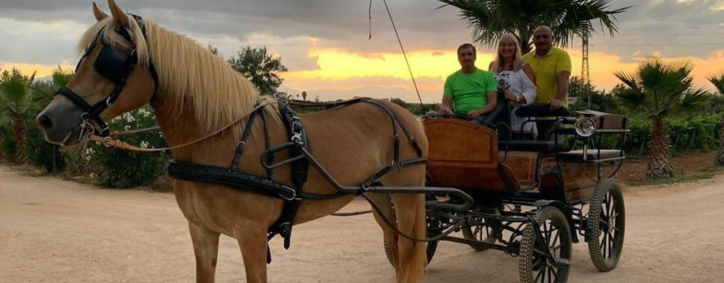 Tocht met paard en wagen op het Siciliaanse platteland