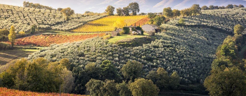 Tour del vino de Montefalco en autobús desde Todi