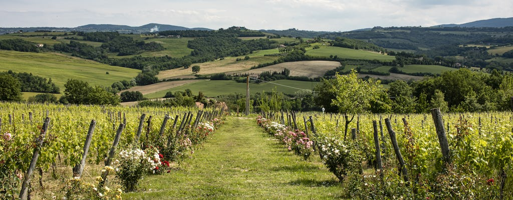 Bus tour of two wineries in Todi