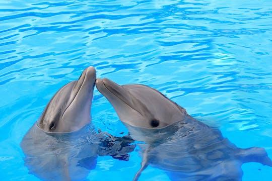 Los Cabos Dolphin Experience