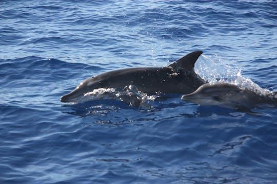 Passeio de barco para observação de baleias e golfinhos