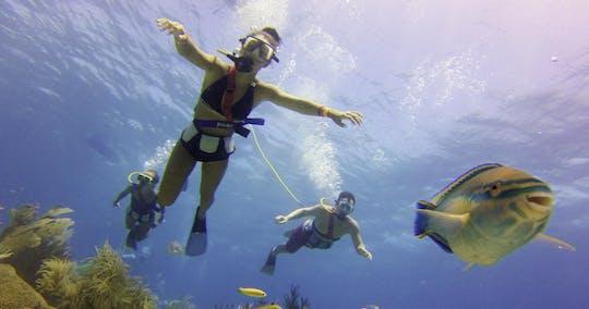 Experiencia de Snuba de Palm Island
