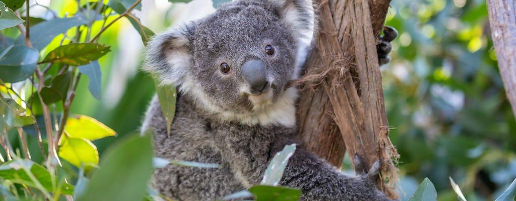 Ingressos para o Wildlife Sydney Zoo