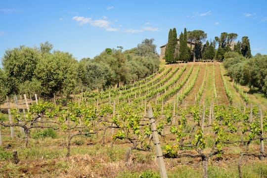 Tour de medio día por los viñedos romanos y cata de vinos.