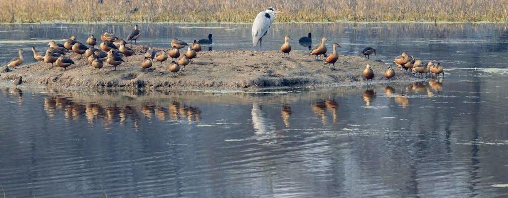 Santuario de aves de Bharatpur de medio día desde Agra