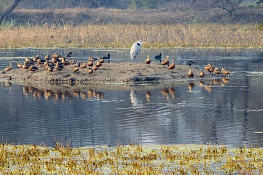 Half Day Bharatpur Bird Sanctuary from Agra