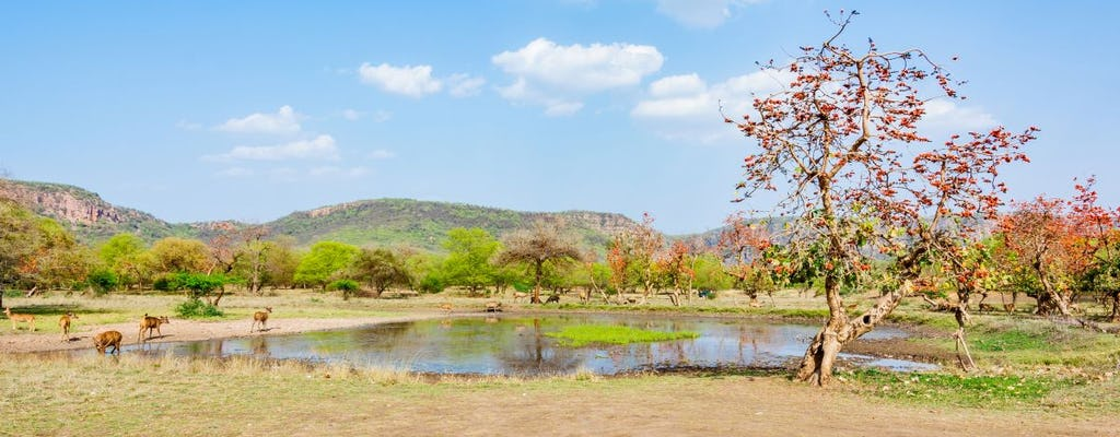 Half-day tour into the past at Ranthambore