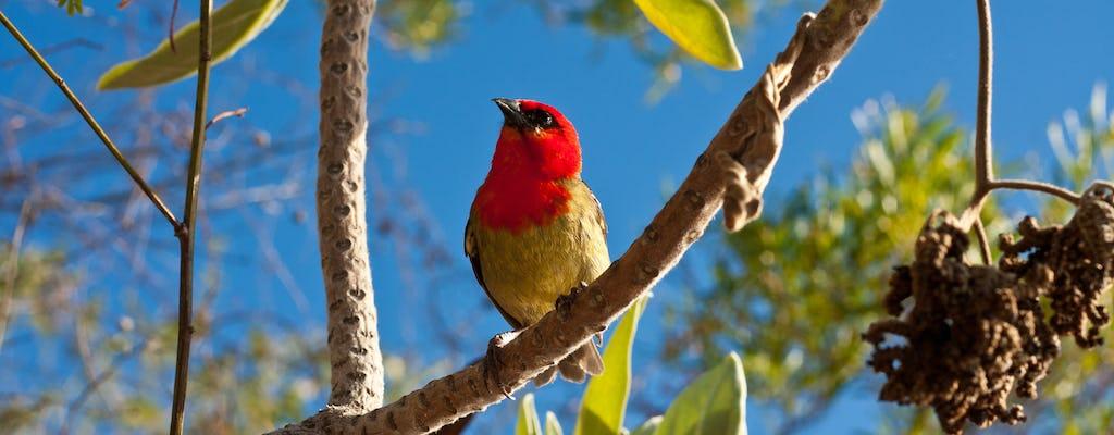 Mauritius Ebony Forest e tour di birdwatching