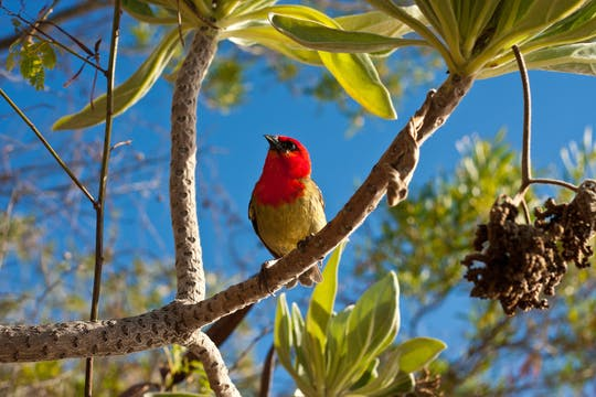 Mauritius Ebony Forest and bird watching tour