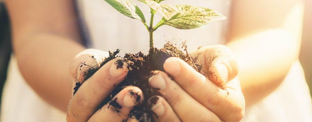 Mauricio Ebony Forest y planta un árbol