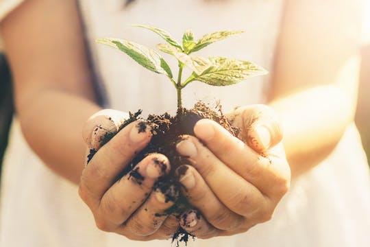 Mauritius Ebenholz Wald und pflanzen einen Baum