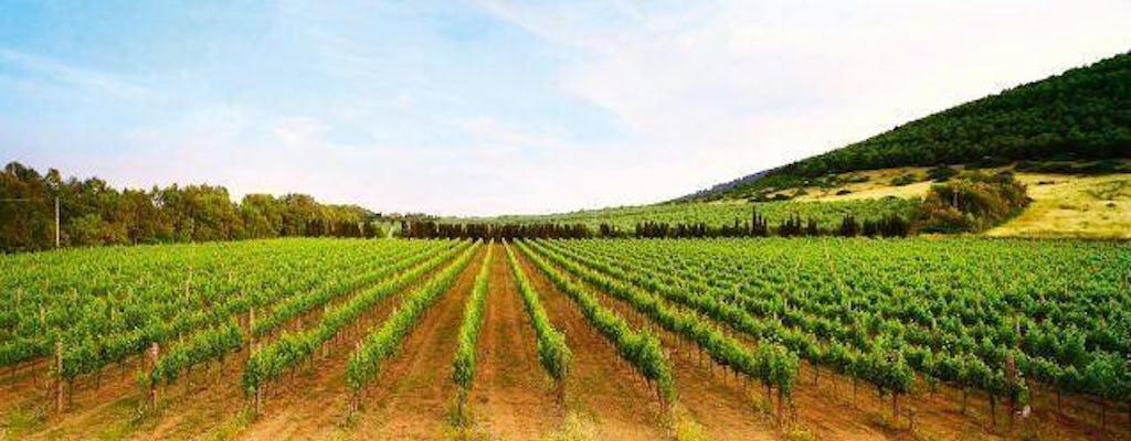 Wijn- & Olijfboomgaarden