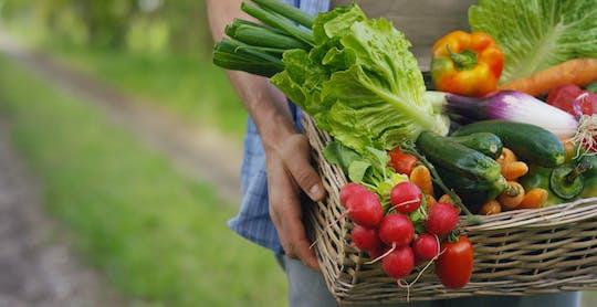 Wycieczka po ogrodzie bananowym i pokaz gotowania żywności ekologicznej przez Adaaran Select Hudhuranfushi
