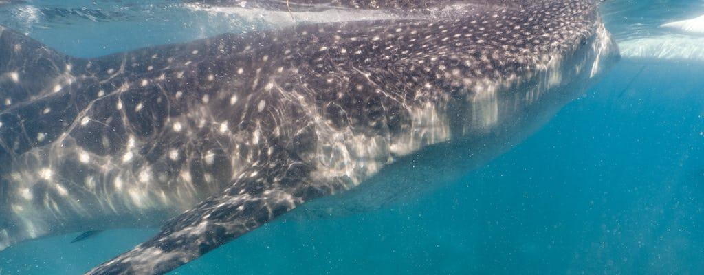 Shark watching in the reef by Adaaran Select Hudhuranfushi