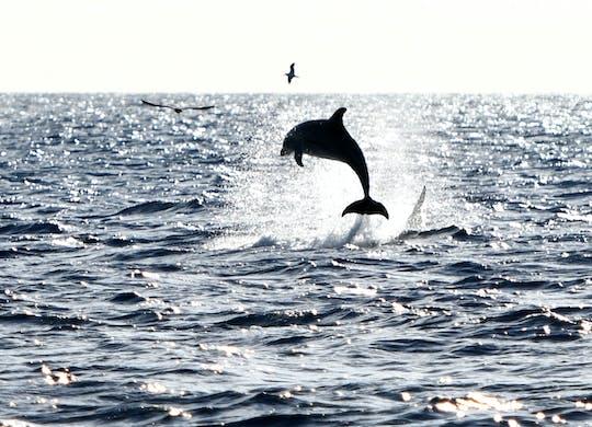 Robinson Catamaran Dolphin Watching Tour North Majorca with Transfer