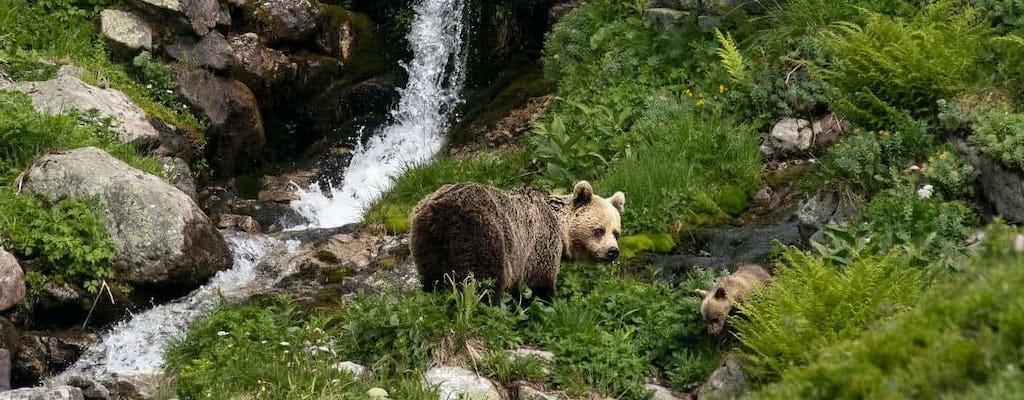 Наблюдение за медведями в поход однодневный тур в Высокие Татры