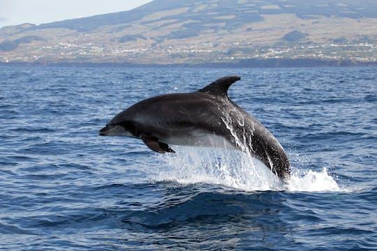 Terceira - wycieczka z obserwacją wielorybów (tylko bilet)