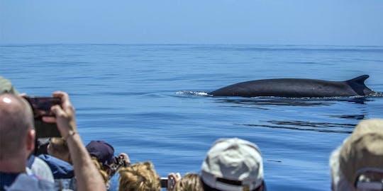 São Miguel Whale Watching & Islet Ticket