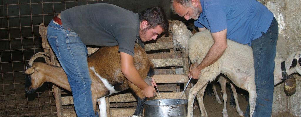 Visite guidée des grottes de Crète et fabrication du fromage dans une ferme