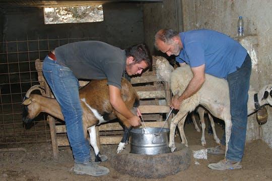Visita guidata alle grotte di Creta e alla produzione del formaggio in una fattoria
