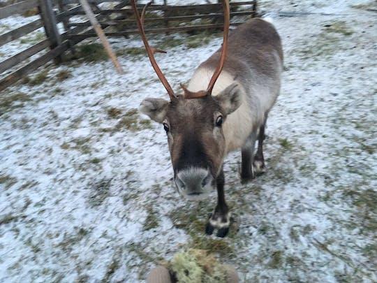 Helsinki city sightseeing and Nuuksio Reindeer Park