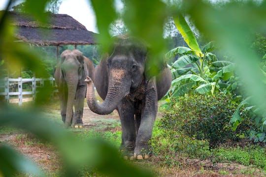 Elephant Retreat Khao Lak