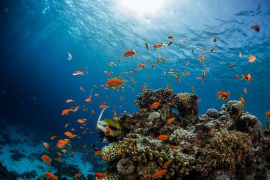 Submarino e mergulho com snorkel em Dahab de Sharm