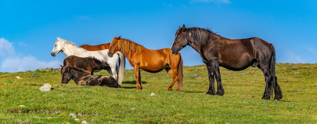 Private Balkan horse riding experience with Glozhene Monastery