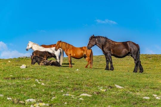 Private Reiterfahrung auf dem Balkan mit dem Kloster Glozhene