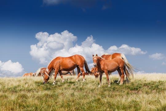 Equitação em Tetevan Balkan a partir de Sofia