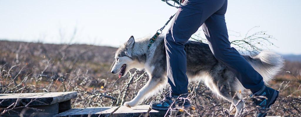 Machen Sie einen Spaziergang in der arktischen Natur mit Husky-Hunden