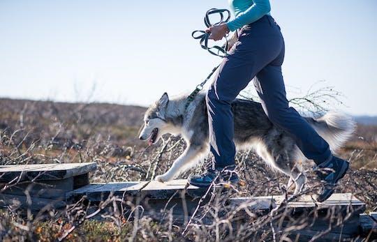 Promenez-vous dans la nature arctique avec des chiens husky