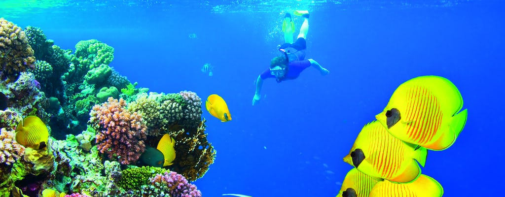 Red Sea diving experiences with transfer