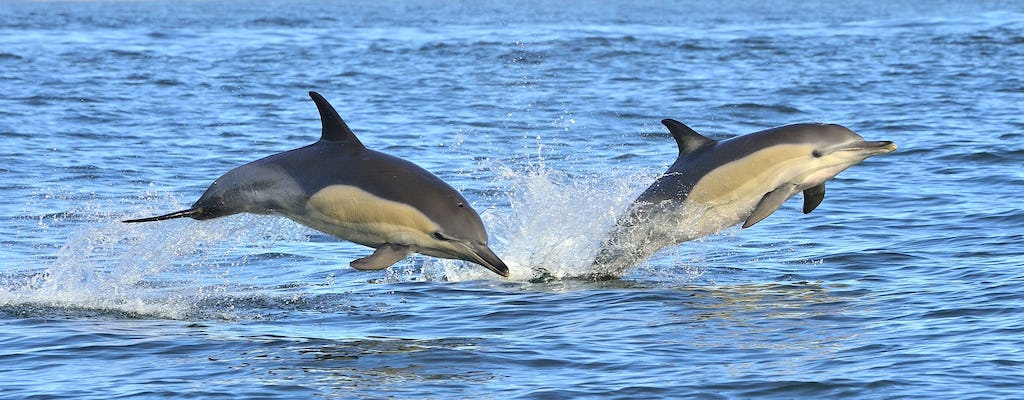 Dolphin watching tour from Lagos