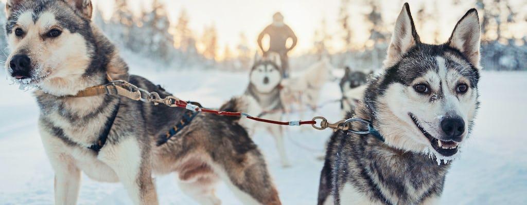 4-hour husky safari in the Finnish Lapland