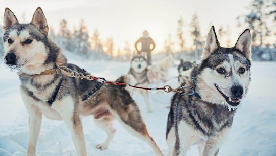 Safari de huskys de 4 horas en la Laponia finlandesa