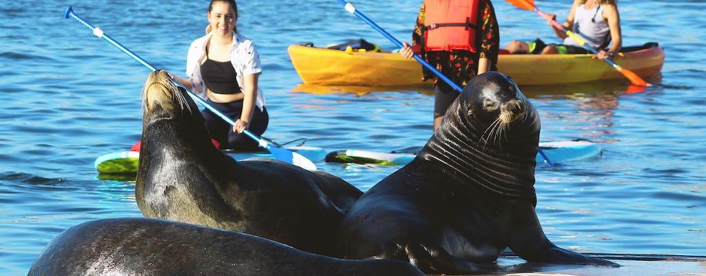 Tour en kayak y remo en Marina del Rey con leones marinos