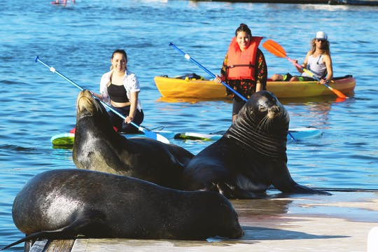 Marina Del Rey kayak and paddleboard tour with sea lions