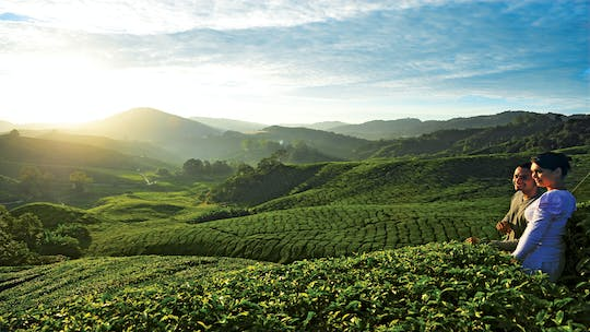 Private nature trip to Cameron Highlands from Kuala Lumpur