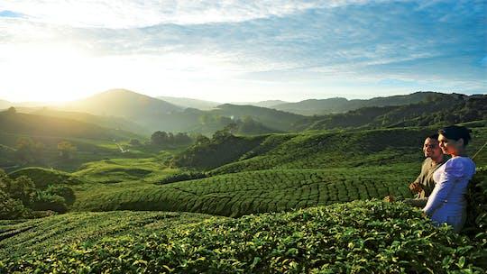 Privater Naturausflug nach Cameron Highlands von Kuala Lumpur