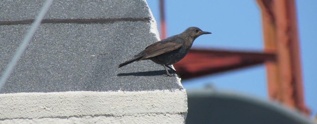 Ganztägige Vogelbeobachtung in Monchique