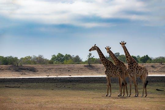 Excursão de dia inteiro ao Parque Nacional Kruger saindo de Pretória