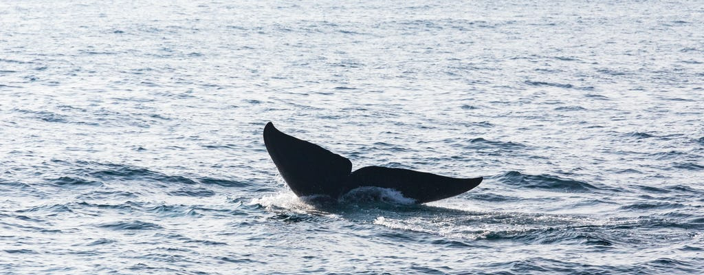 São Miguel Whale Watching & 4x4 Truck Tour