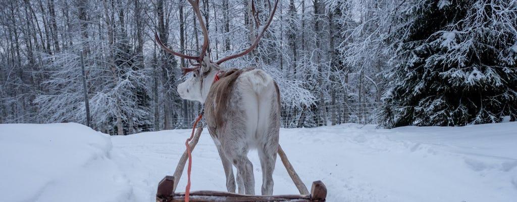 Traditional reindeer safari in Lapland