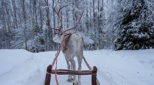 Традиционных оленьих упряжках в Лапландии